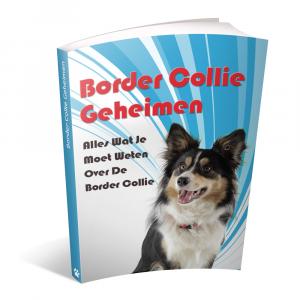 Training Border Collie