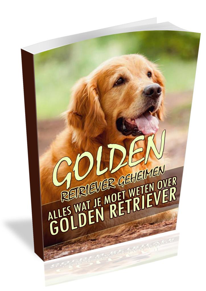 Training Golden Retriever