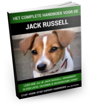 Jack Russell training